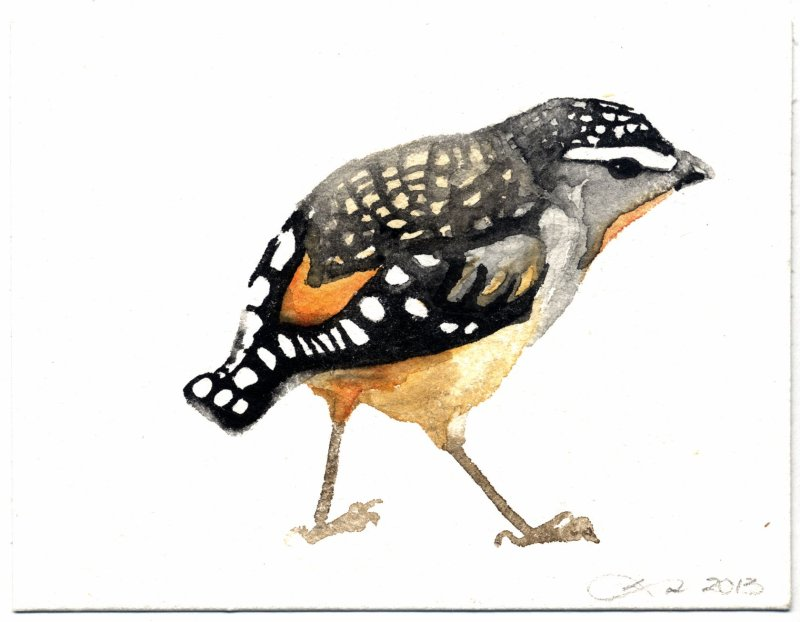 Cautious Spotted Pardalote Watercolour